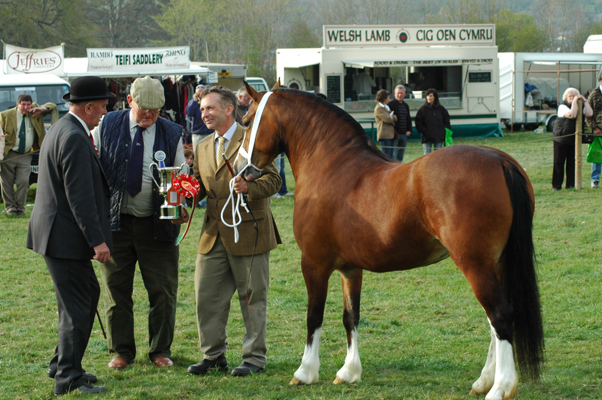 Nebo Rebecca receiving the supreme filly at Lampeter Stallion Show